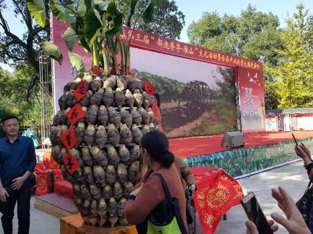 亚洲城国际_这么大的芋头和淮山你见过吗?