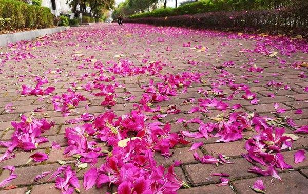 浪漫!桂林的这些路美成童话!
