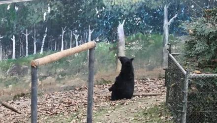 被怀疑是人扮的,这只熊火了!