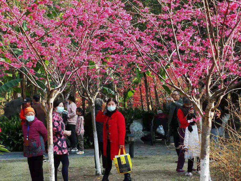 浪漫!桂林南溪公园樱花盛放美如画
