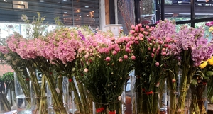 桂林鲜花价格上涨